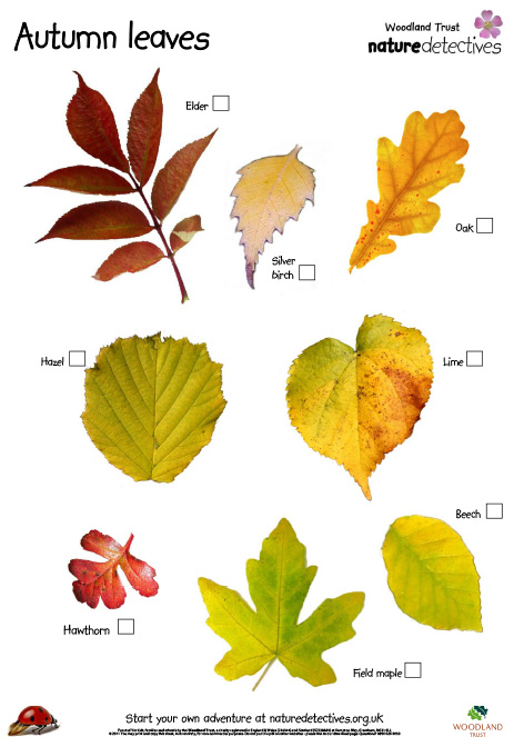 Фото и названия листьев